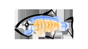 GlassFish vServer